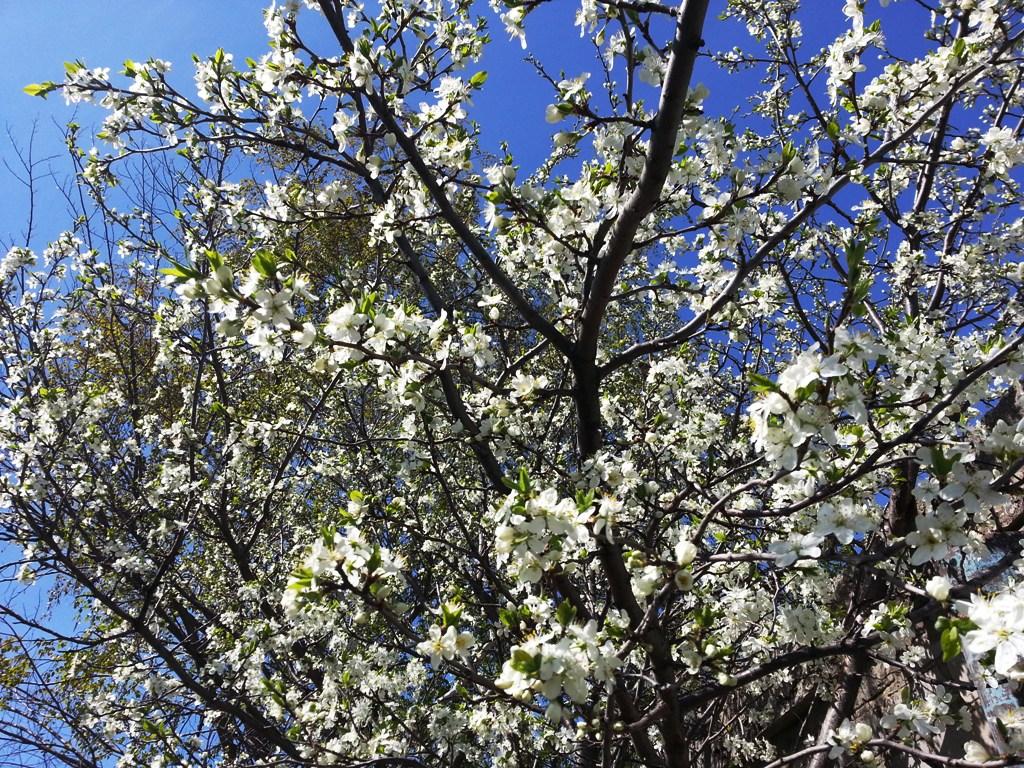 продаётся дом 1 млн 800 тыс руб участок 12 соток Большой яблоневый сад